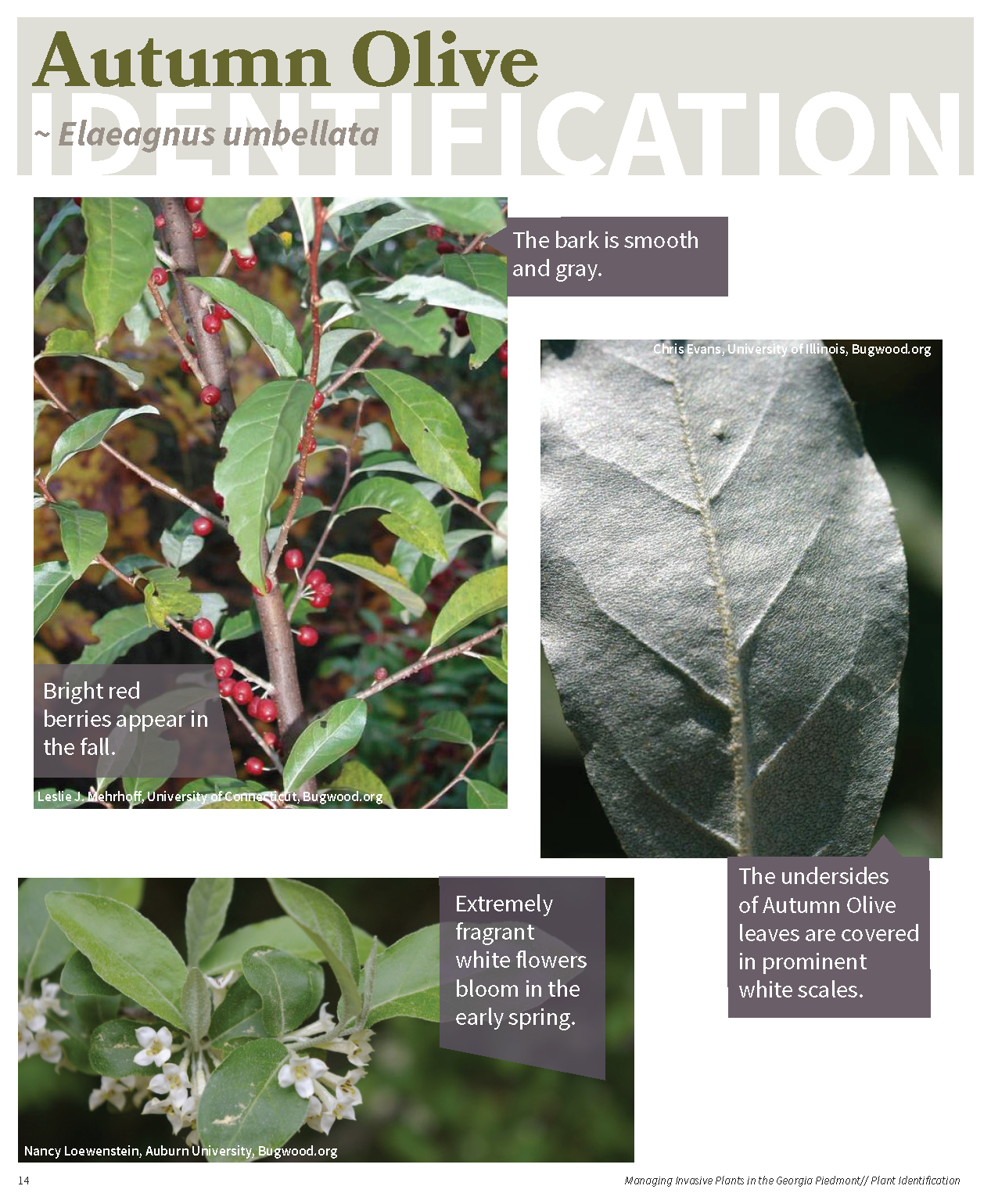 Managing Invasive Plants in the GA Piedmont for web_Page_13