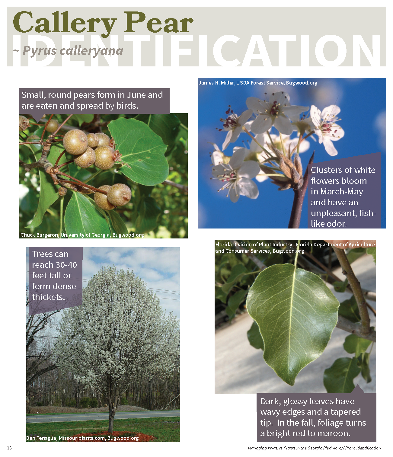Managing Invasive Plants in the GA Piedmont for web_Page_15