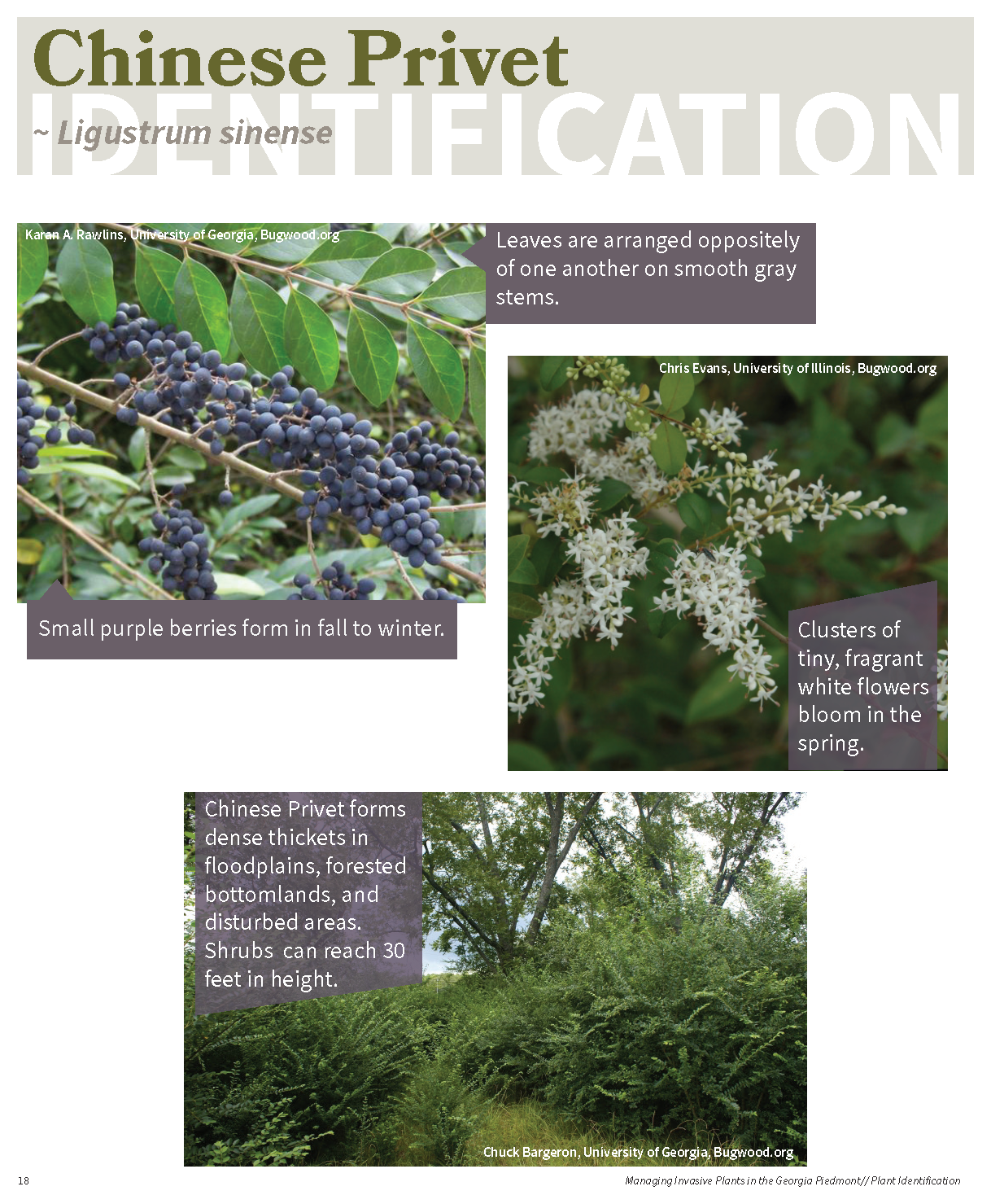 Managing Invasive Plants in the GA Piedmont for web_Page_17