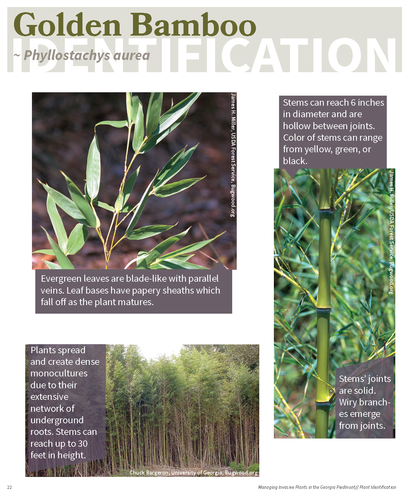 Managing Invasive Plants in the GA Piedmont for web_Page_21