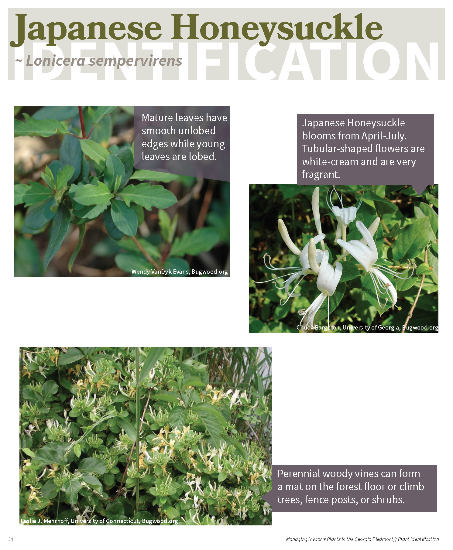 Managing Invasive Plants in the GA Piedmont for web_Page_23