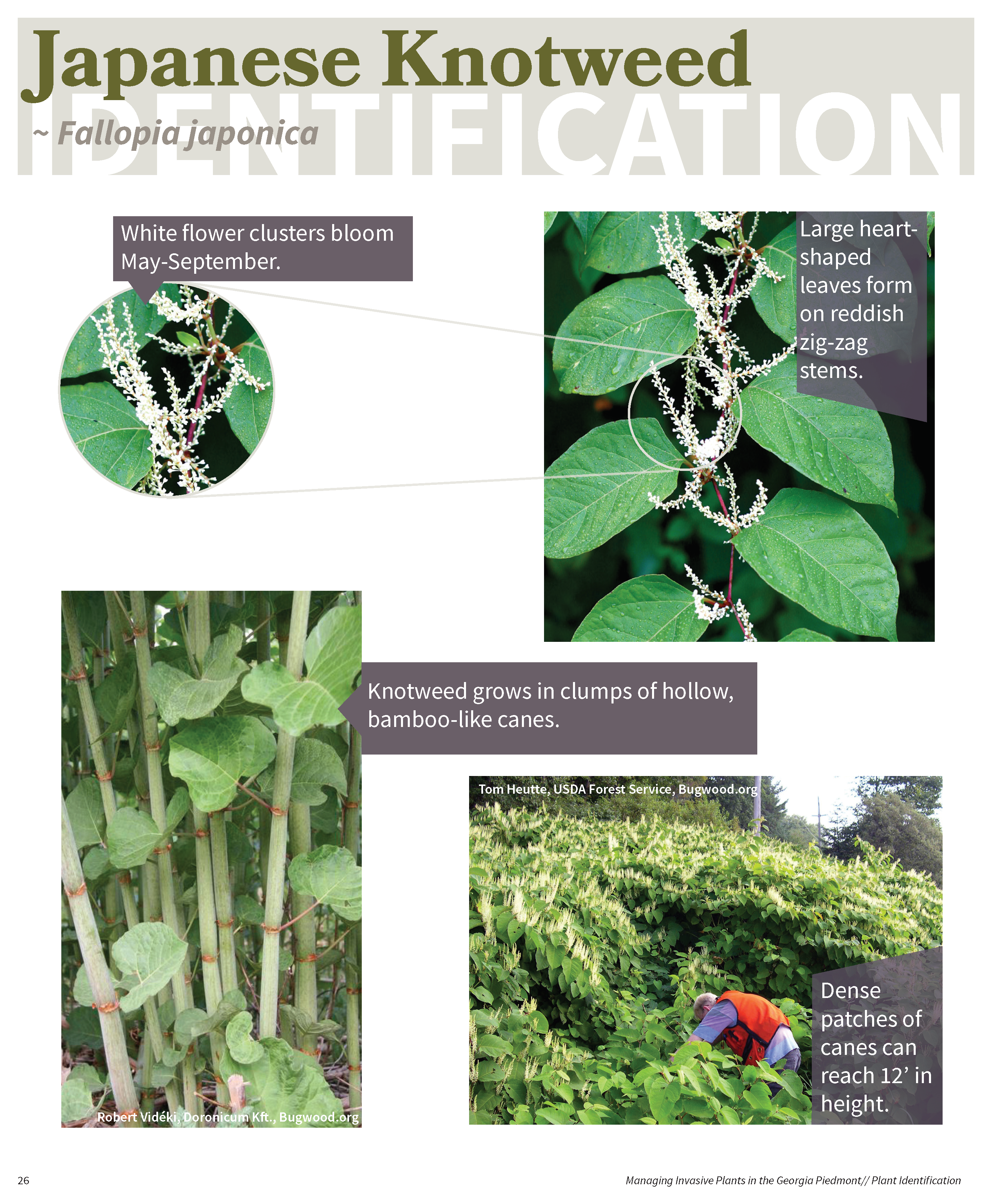 Managing Invasive Plants in the GA Piedmont for web_Page_25