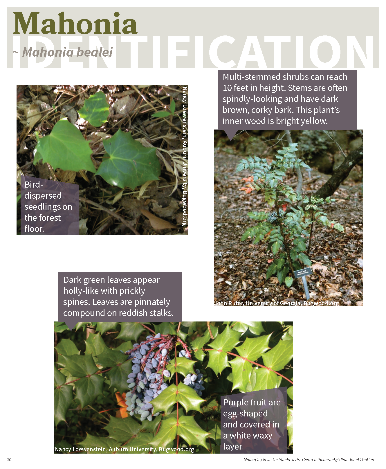 Managing Invasive Plants in the GA Piedmont for web_Page_29