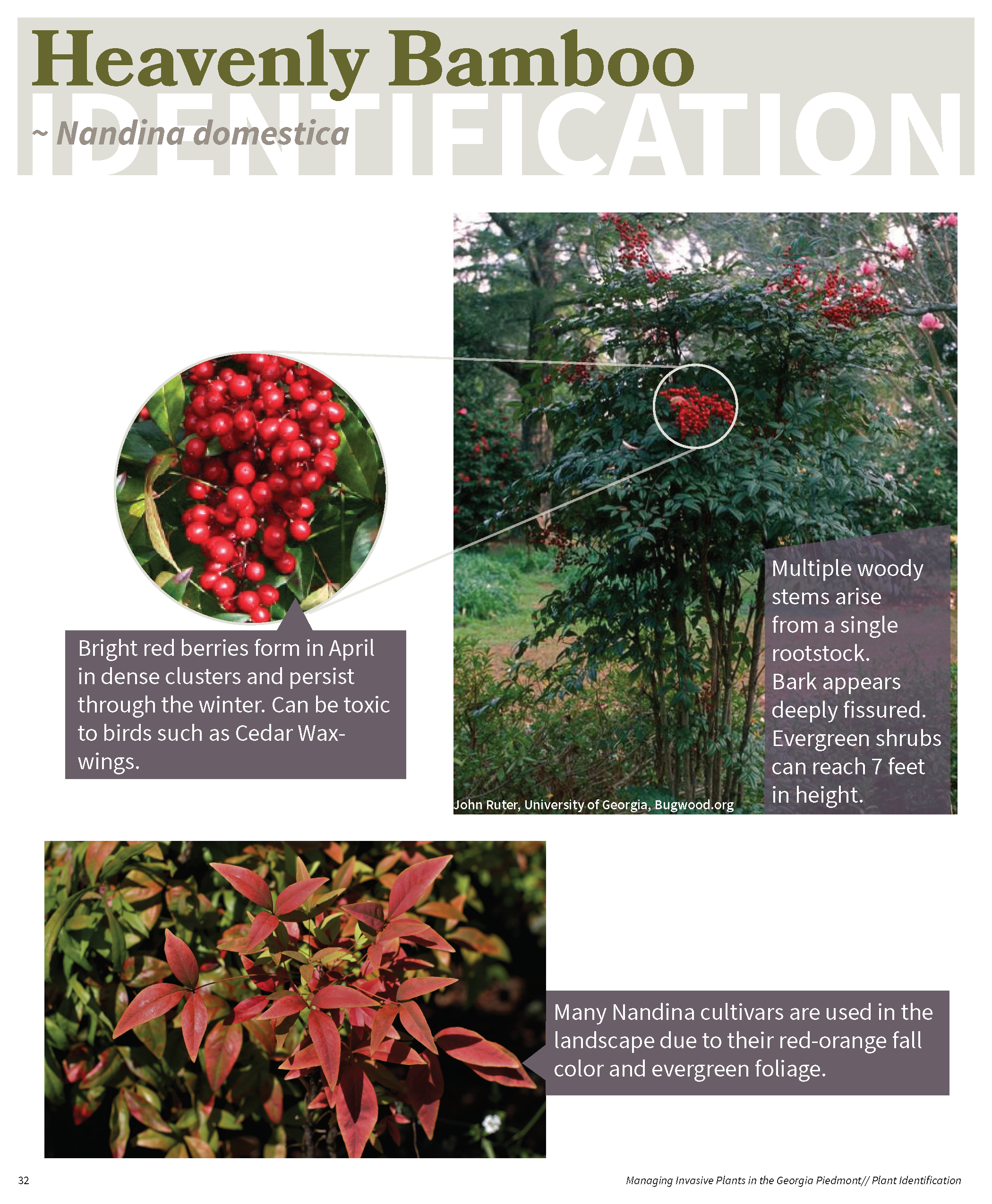 Managing Invasive Plants in the GA Piedmont for web_Page_31