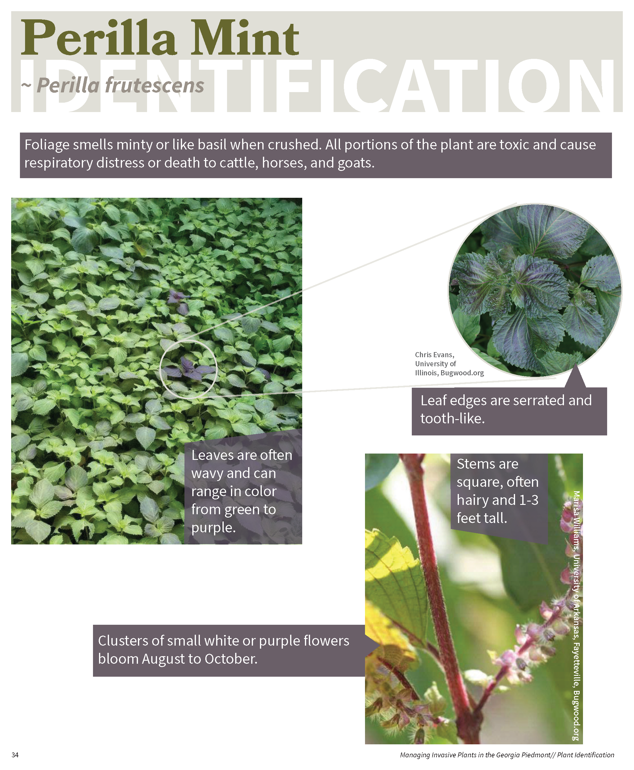 Managing Invasive Plants in the GA Piedmont for web_Page_33