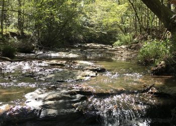 Briar Creek1